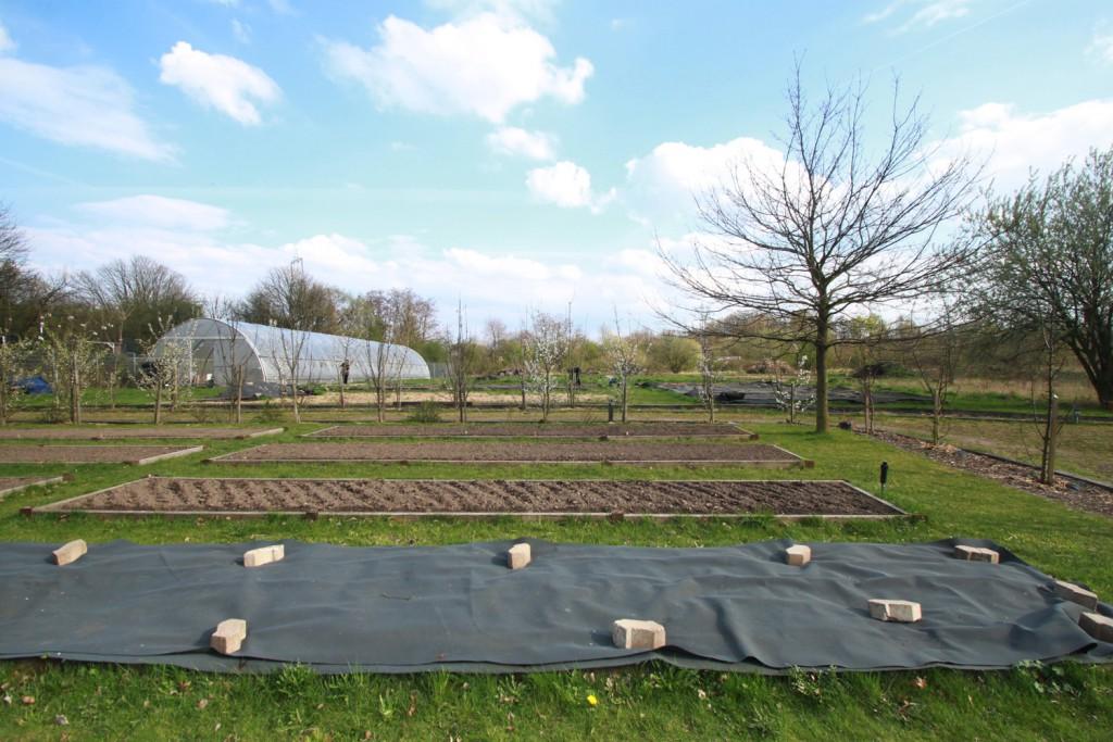 Die Hochbeete auf dem Bonnekamp-Gelände im Frühling –hier gibt's so oder so noch nix zu sehen ;)